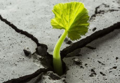 """Webinar: """"Resistent o resilient: romandre o avançar"""""""